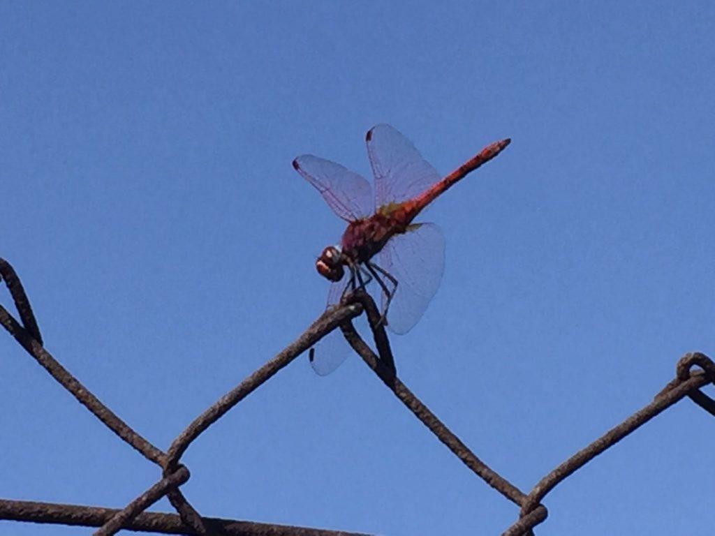 Libelle uitjebewust